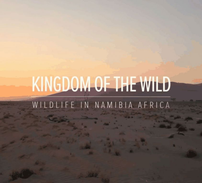 Kingdomofthewild